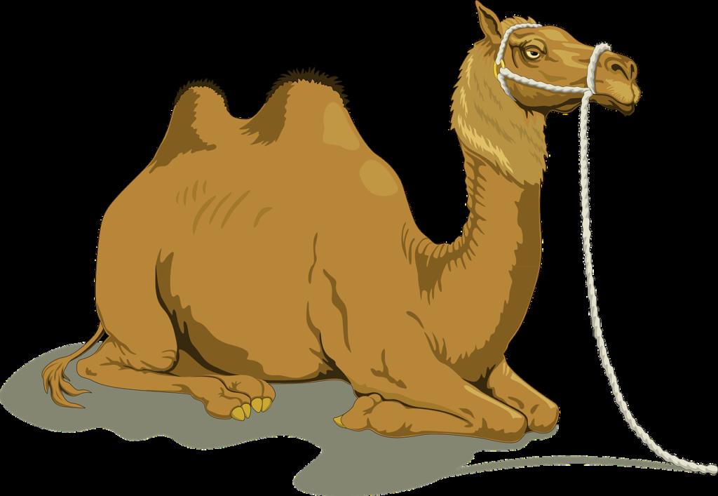 ラクダのイメージ写真